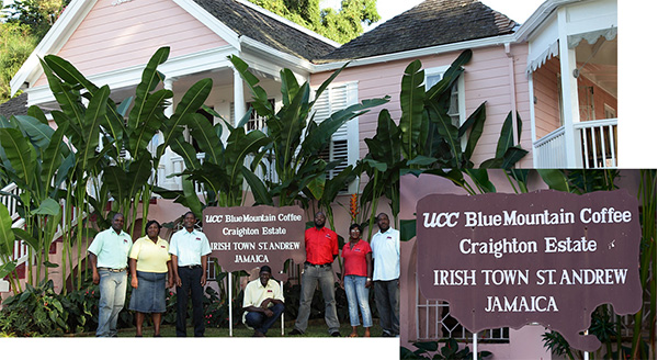 ジャマイカの直営農園